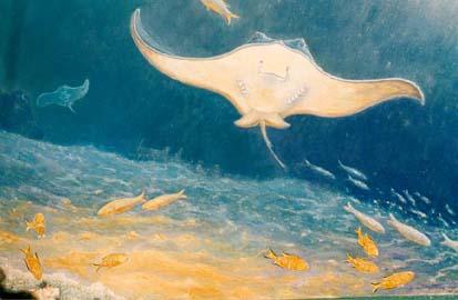 http://sm.cousteau.free.fr/raie.jpg